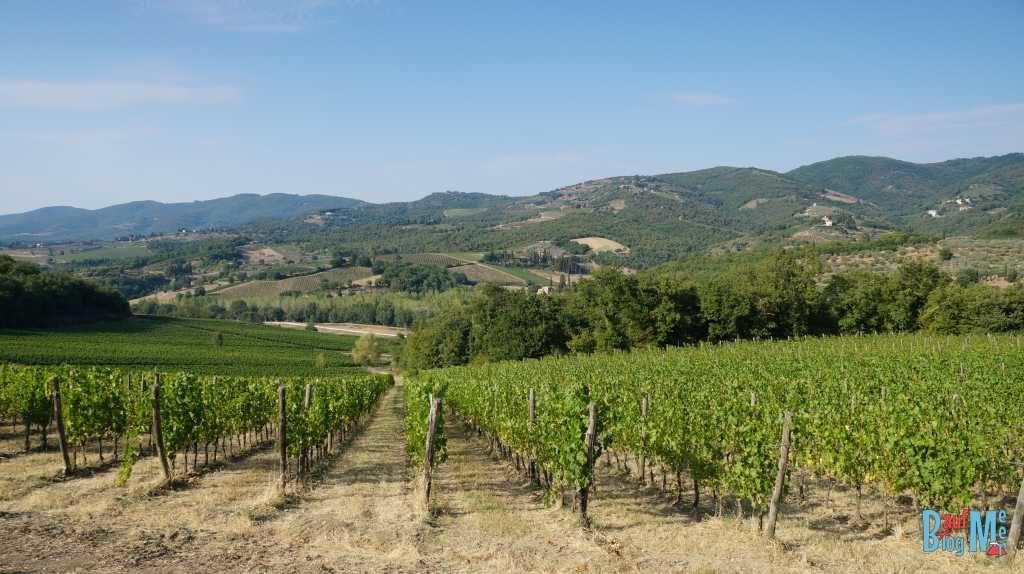 Weinreben in der Toskana