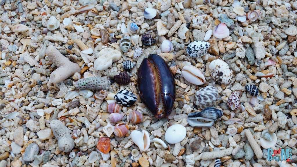 Paradies für Muschelsammler