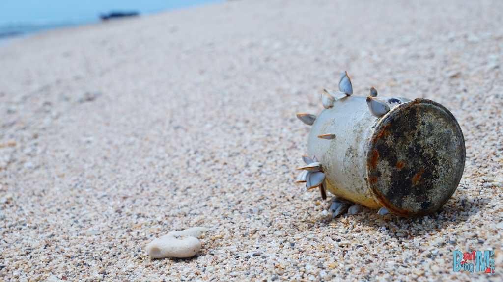 Die Natur weiß den Müll teilweise zu nutzen