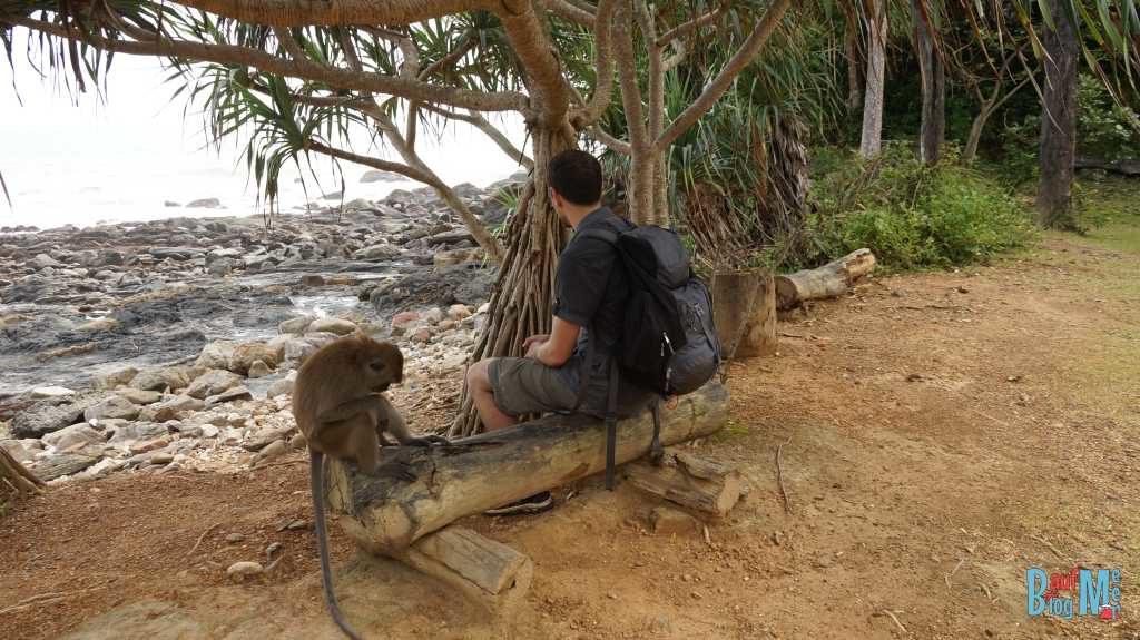 Dieses Exemplar gehörte zur netteren Sorte - der Affe ist gemeint ????
