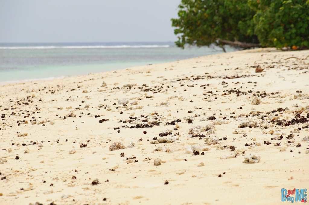 Korallenbruchstücke auf dem Strand der Insel Merak