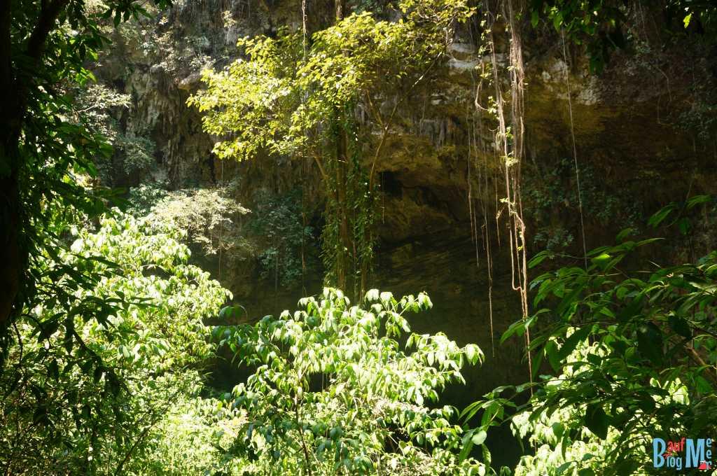 Wald vor dem Eingang zur Goa Jomblang