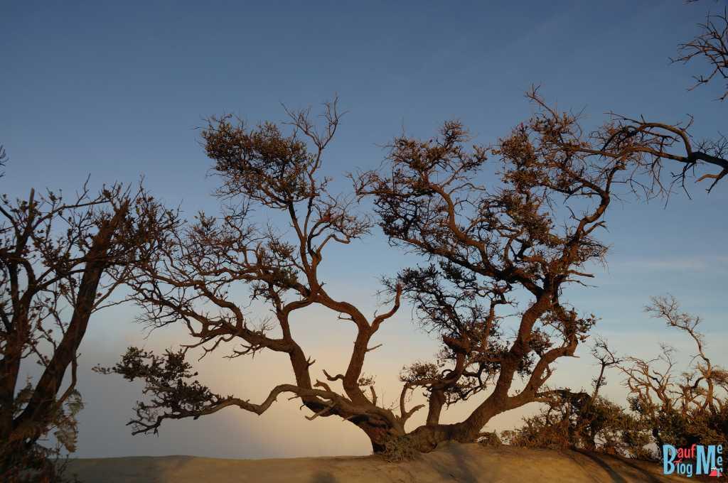 Baum am Ijen Krater