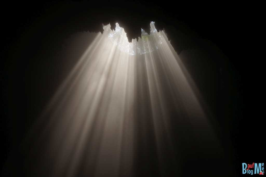 Dieses Blätterdach verursacht das ehavenly light