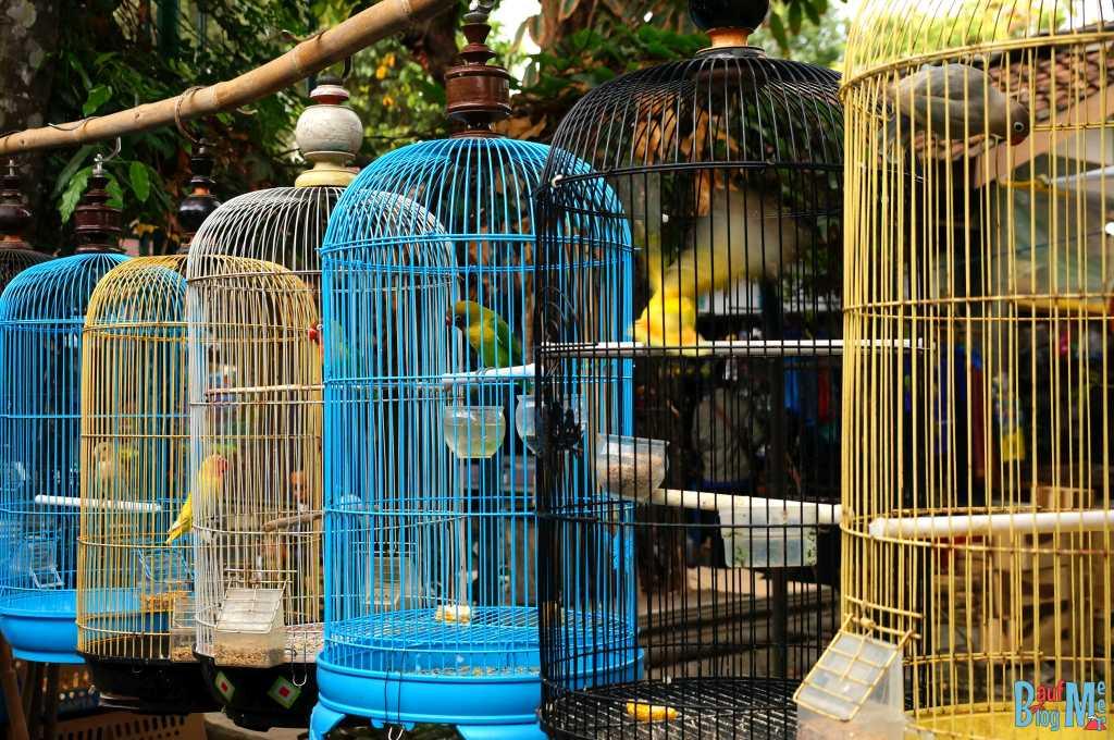 Vogelkäfige im Birdmarket