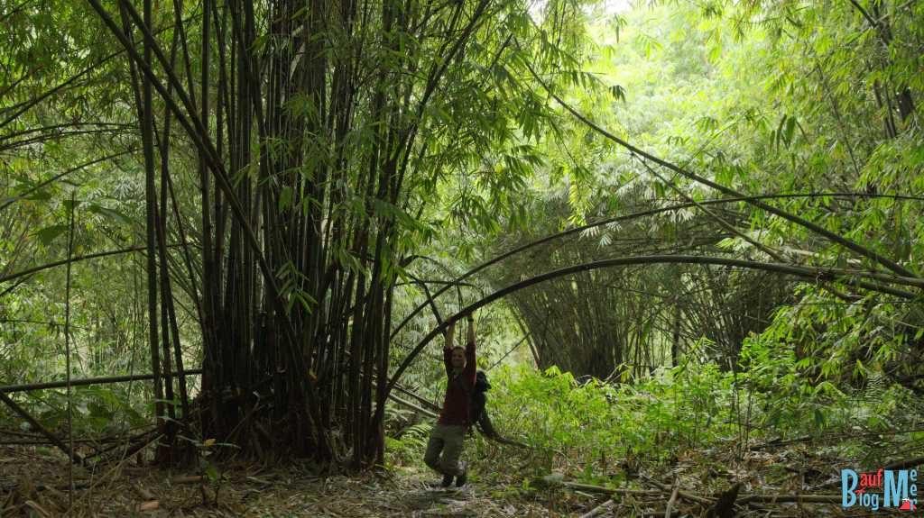 Bambushain beim Abstieg vom Sibayak