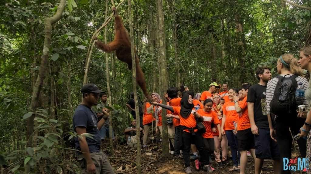 Hieß es nicht Orang-Utans nicht füttern und Abstand halten