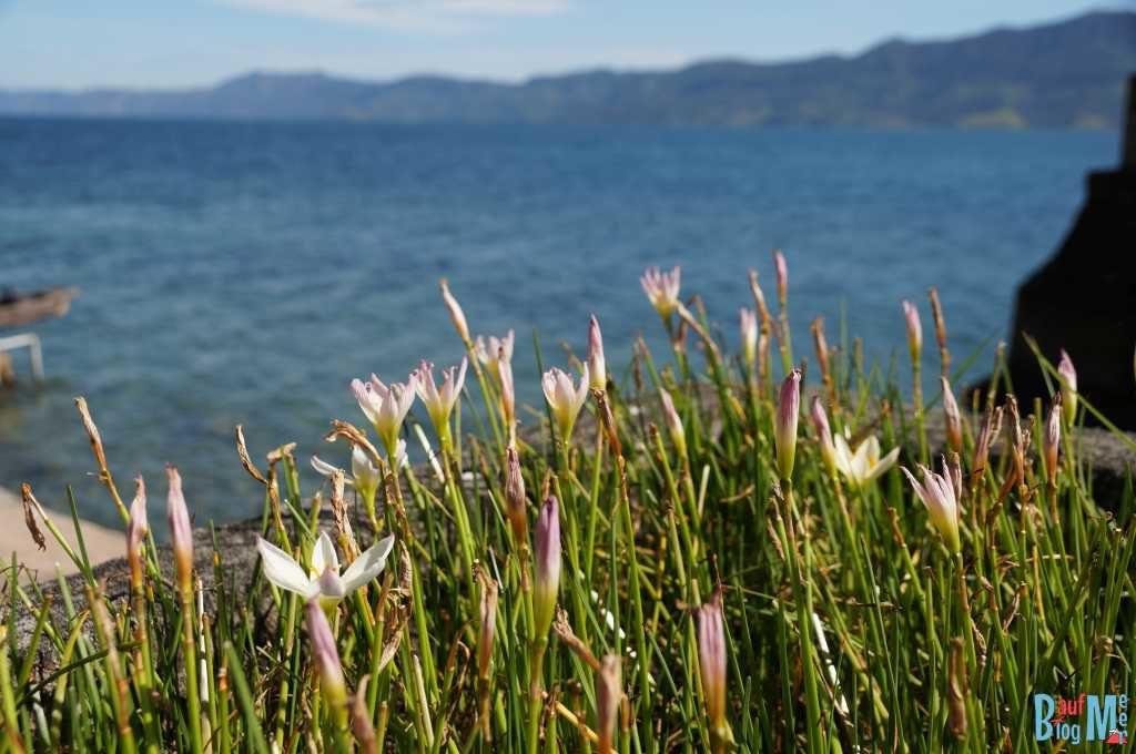 See (Danau) Toba