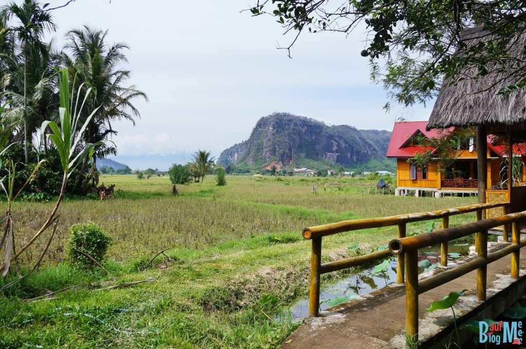 Reisfelder vor Abdis Homestay