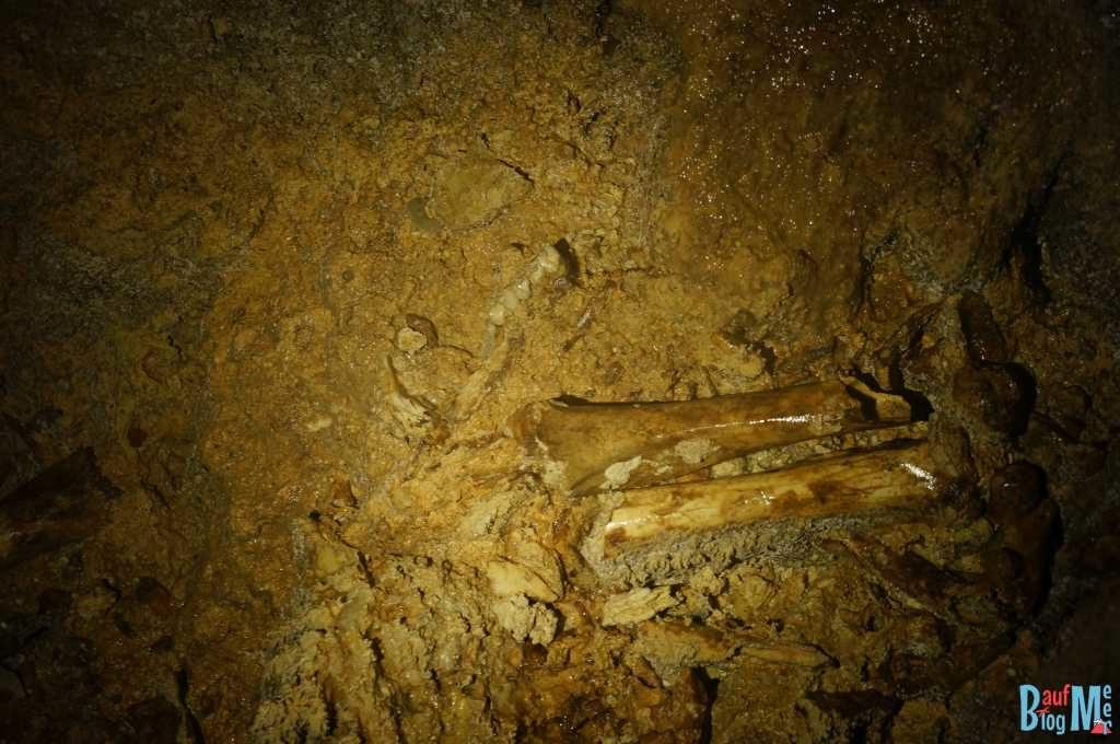 Affengebiss in der Wind Cave im Gunung Mulu Nationalpark