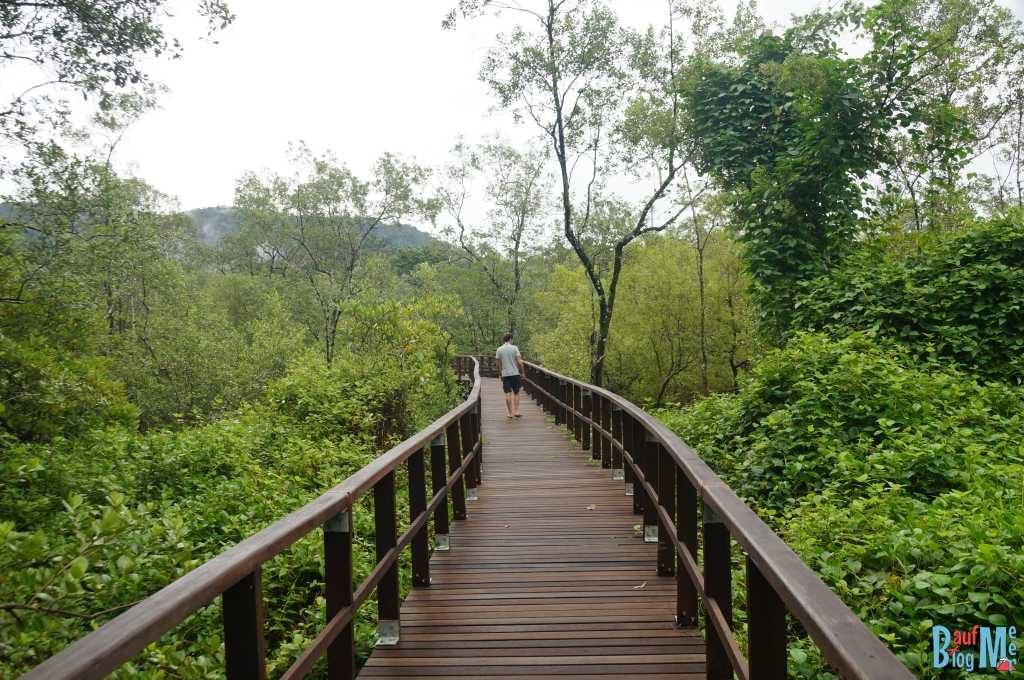 Plankenweg in den Mangroven des Bako Nationalparks