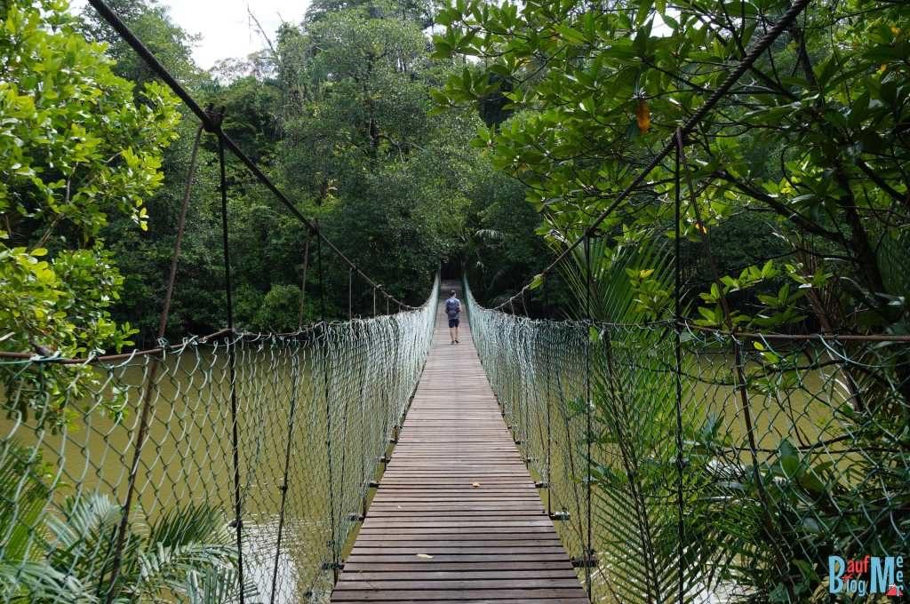Brücke über den Fluss beim Similajau Nationalpark Headquarter. Hier geht es zu den Wanderwegen.