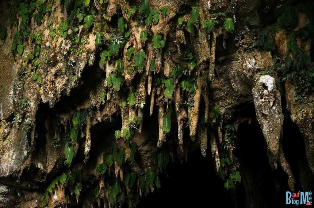 Einblatt beim Wind Cave Eingang im Gunung Mulu Nationalpark