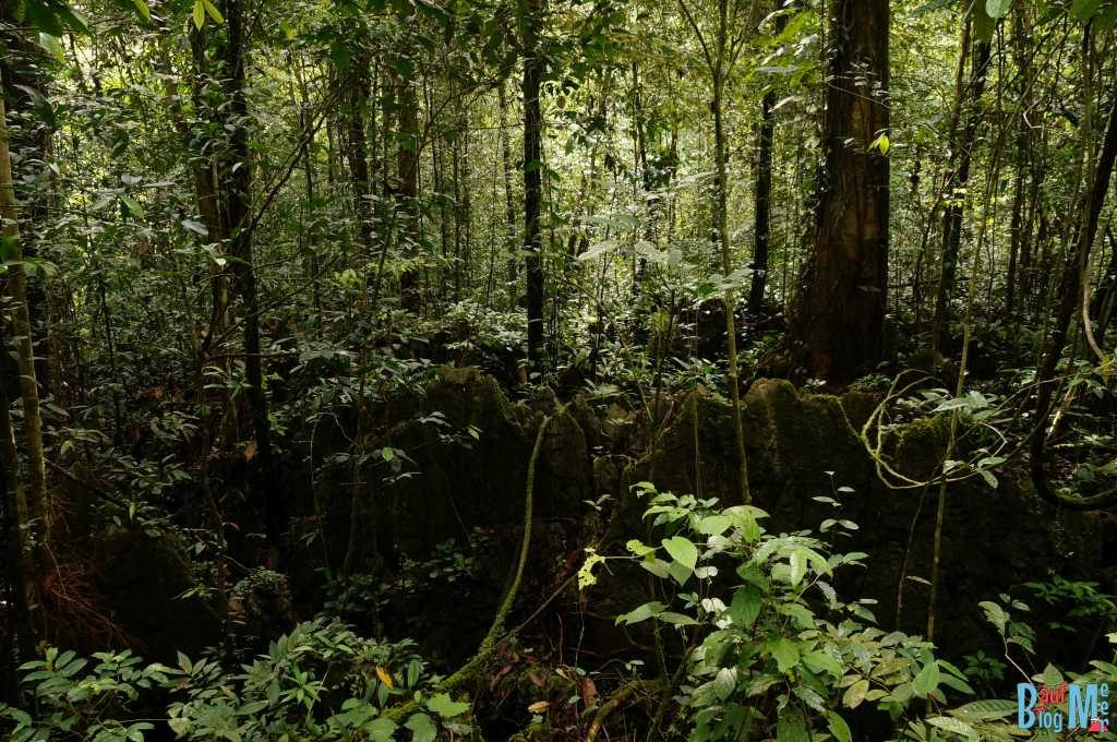 Felsformationen im Gunung Mulu Nationalpark