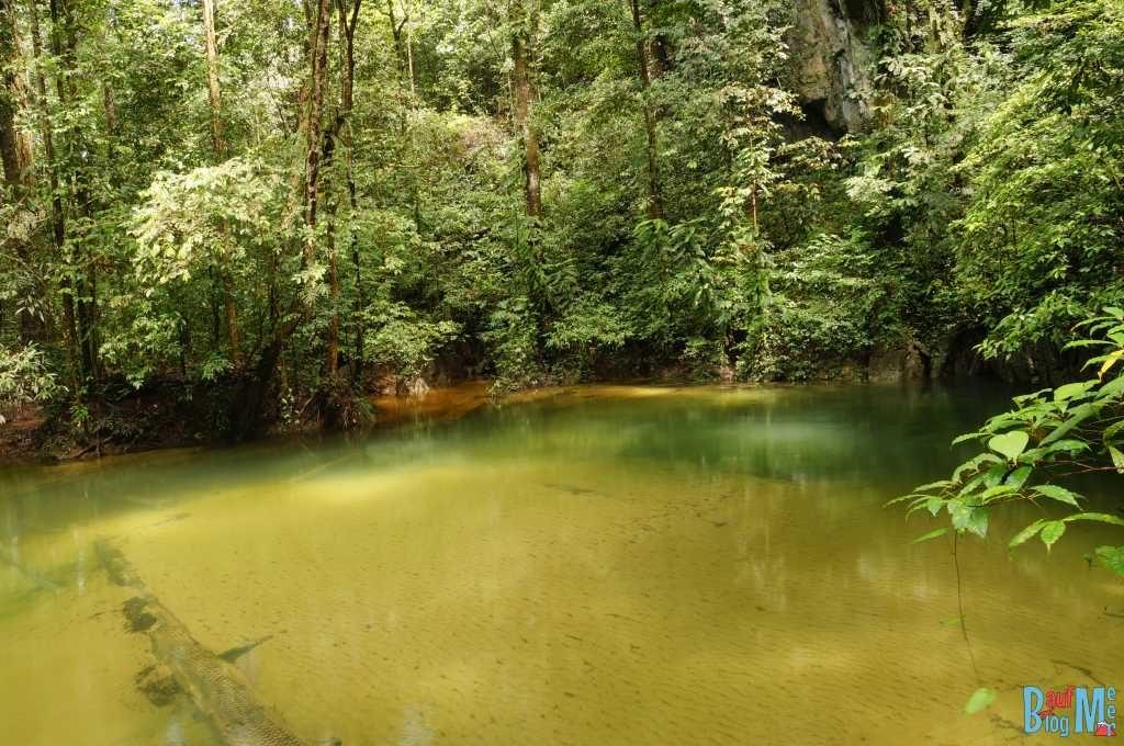 Badestelle vor der Clearwater Cave im Gunung Mulu Nationalpark