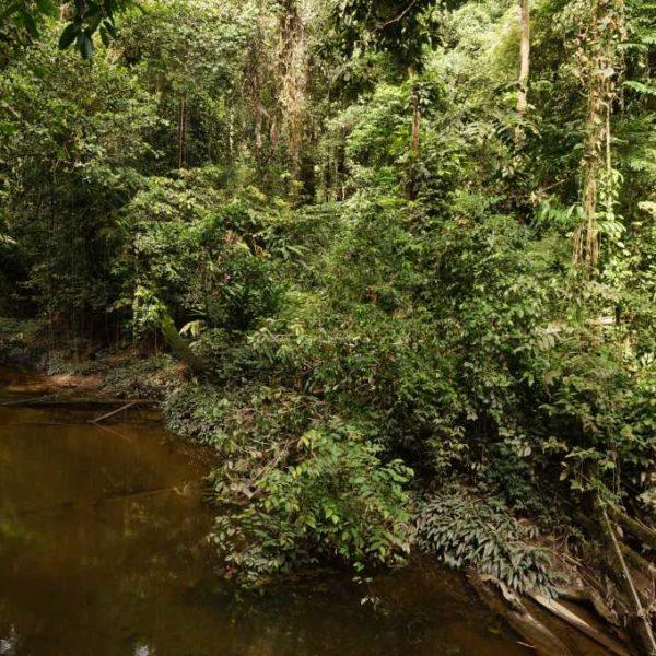 Fluss beim Wandern im Gunung Mulu Nationalpark