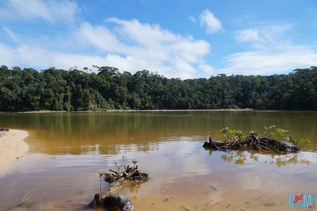 Flussmündung in der Nähe des Similajau Nationalpark Headquarters. Hier müsste man doch Krokodile entdecken...