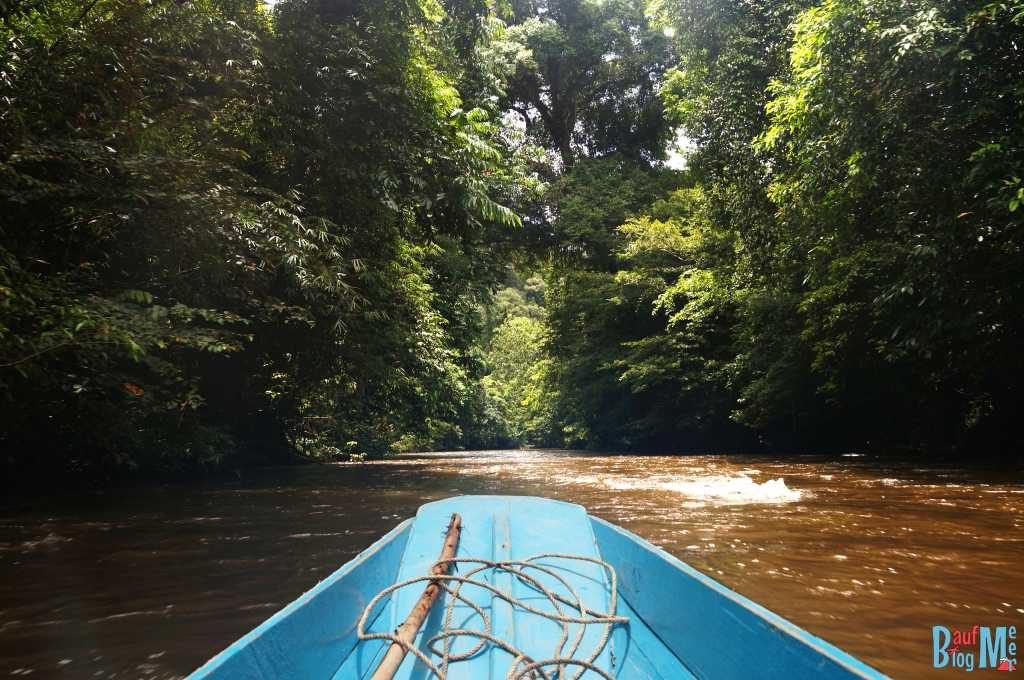 Langboot und Dschungel im Gunung Mulu Nationalpark