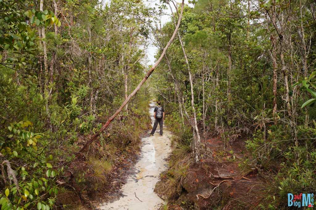 Pfad auf dem Lintang Trail im Bako Nationalpark