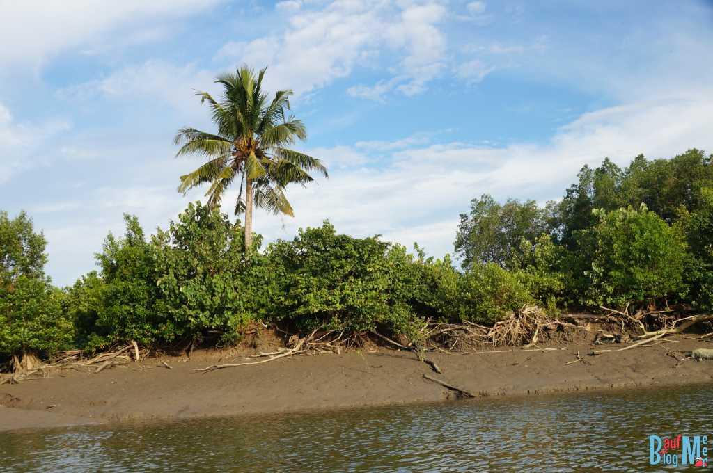 Ufer Sungai Santubong auf dem Wetland Cruise bei Kuching