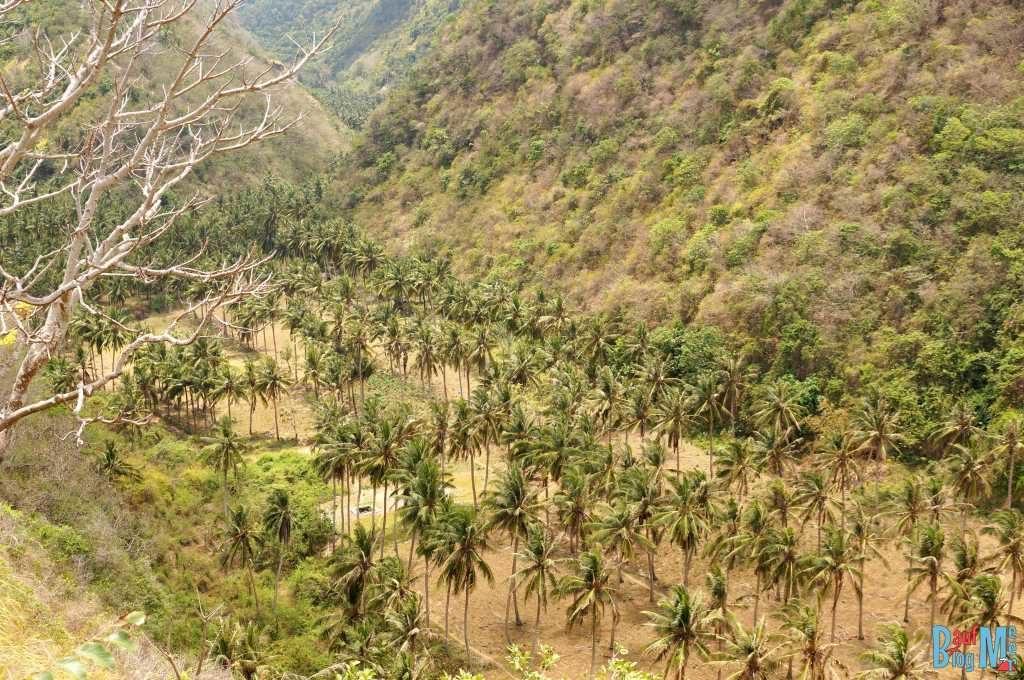 Trockene Palmenlandschaft auf Nusa Penida