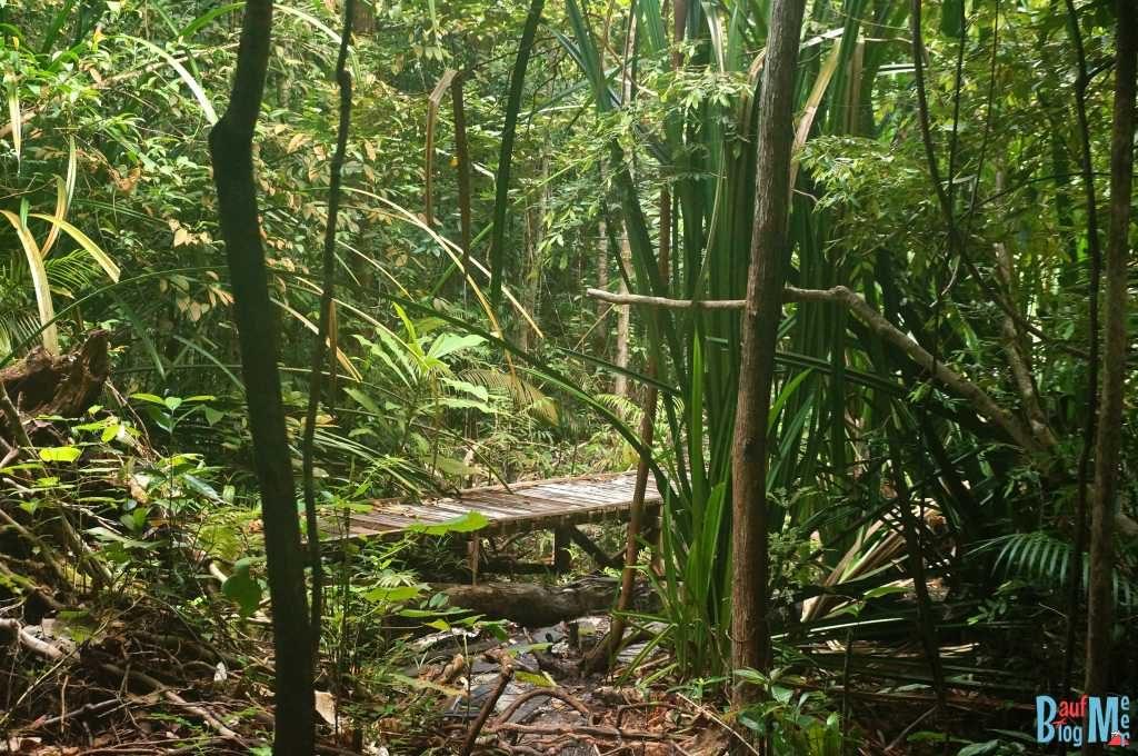 Plankenweg auf der noch einfachen Strecke des Santubong Nationalparks