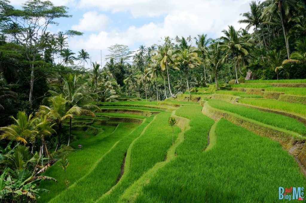 Bali ist: Reisterassen! Reisterassen bei Gunung Kawi