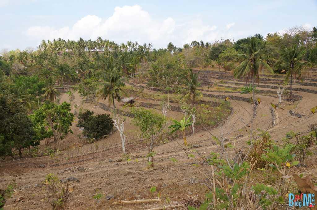 Trockene Reisterassen auf Nusa Penida