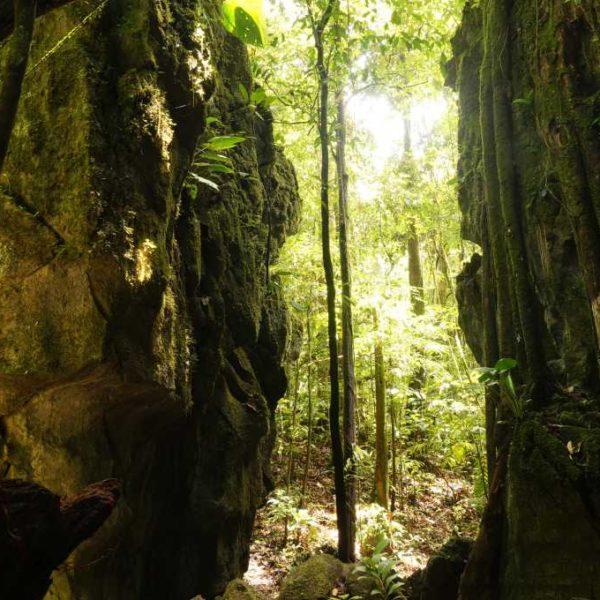 Wanderweg im Gunung Mulu Nationalpark