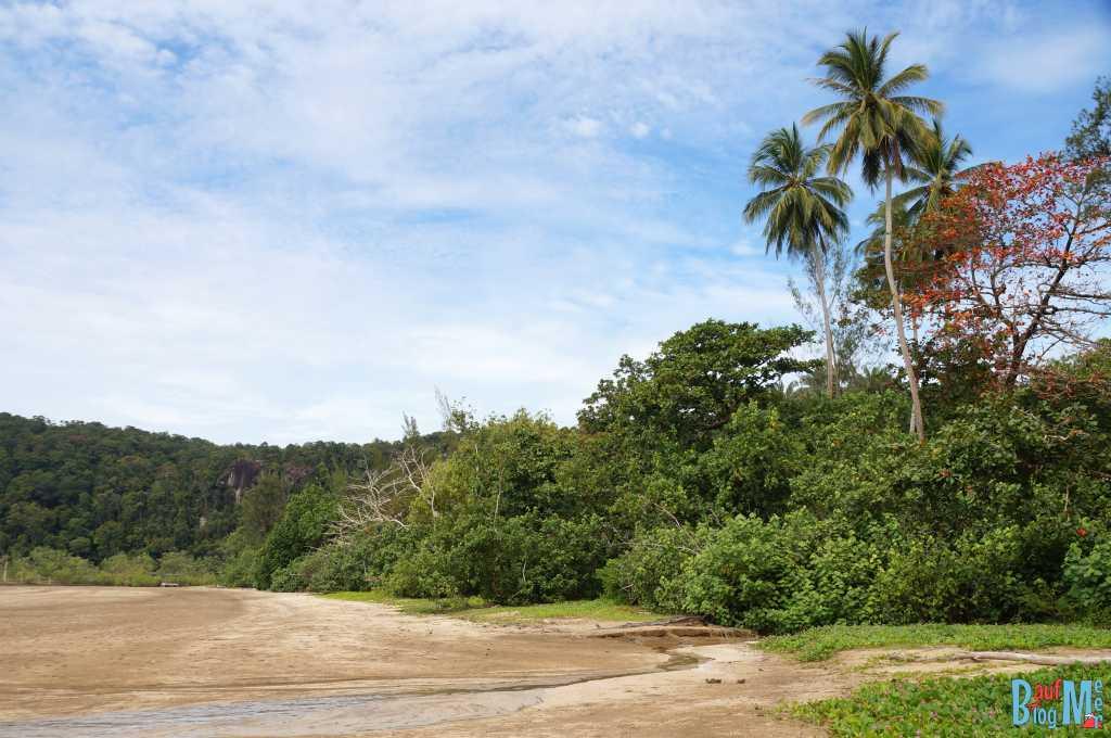 Strand des Bako Nationalparks mit Mangrovengebiet im Hintergrund