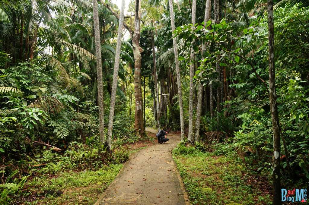 Weg bei den Unterkünften im Bako Nationalpar