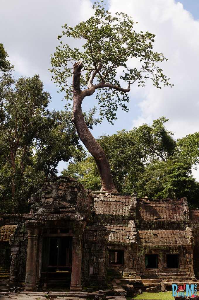 Ta Prohm Tempel von Aussen