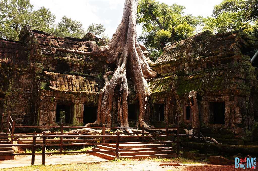 Auf Ta Prohm Tempel wachsender Baum von Innen