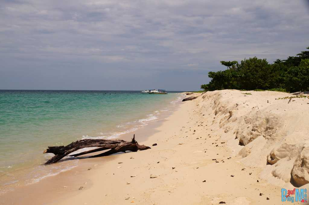 Baumstumpf am Strand von Turtle Island Selingan