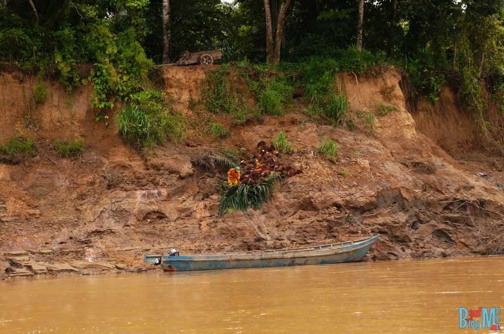 Farmer beim Einladen von Palmölfrüchten am Ufer des Kinabatangan River