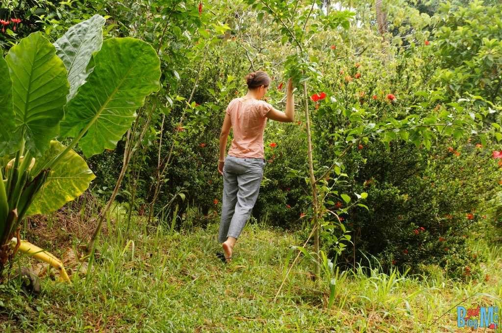 Gartenwege in unserer Unterkunft beim Tip of Borneo