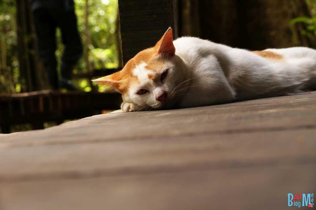 Camp Katze auf unserer Plattform