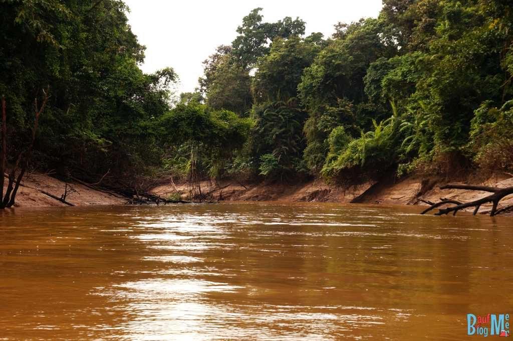 Seitenarm des Kinabatangan River bei Niedrigwasser