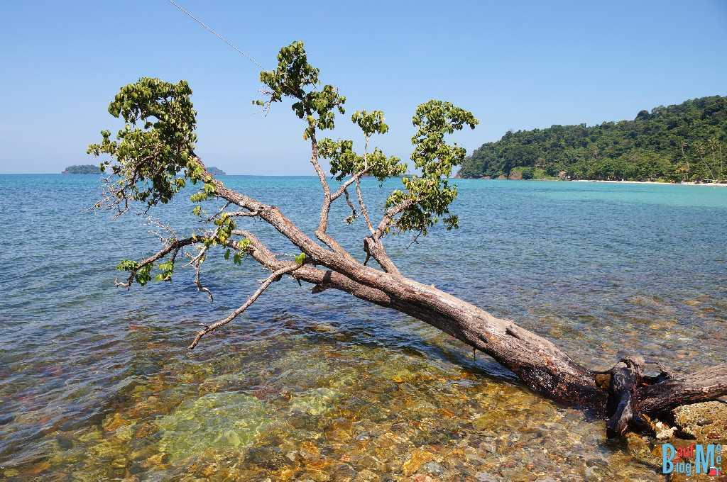 Baum im Meer an einer steinigen Küste