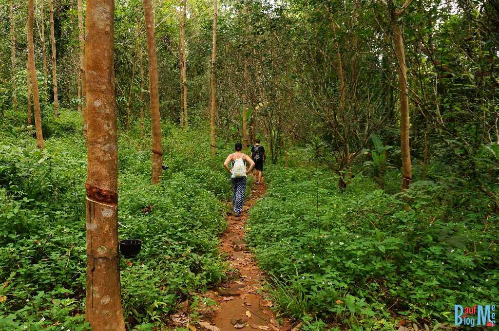 Weg über Kautschukplantagen zum Khiri Phet Wasserfall auf Ko Chang