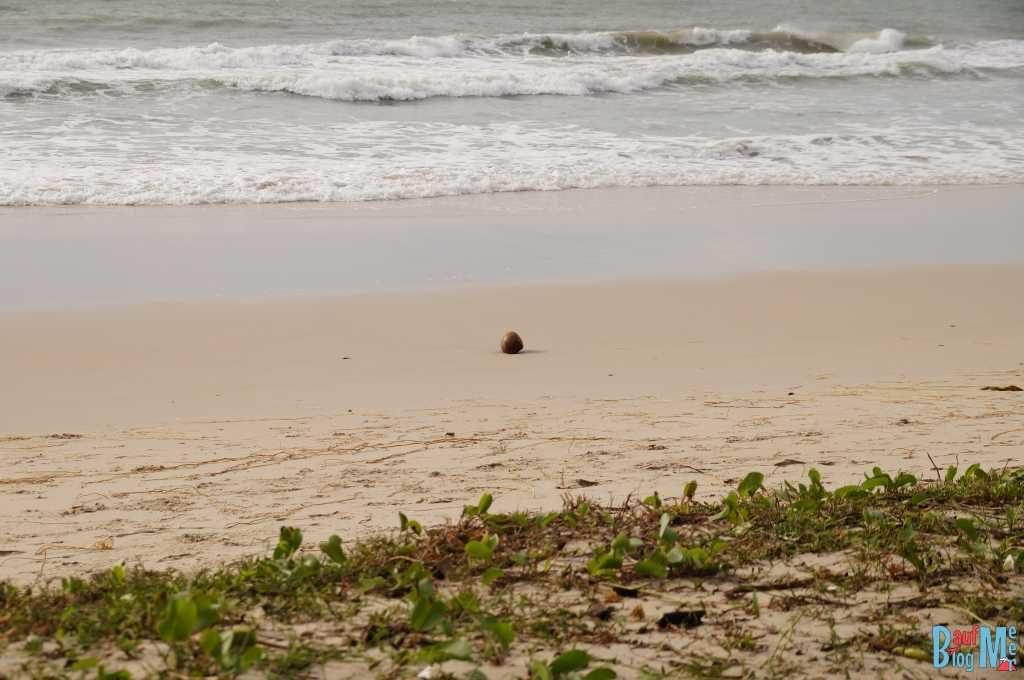 Kokosnuss an einem ruhigeren Tag am Strand des Tampat do Aman