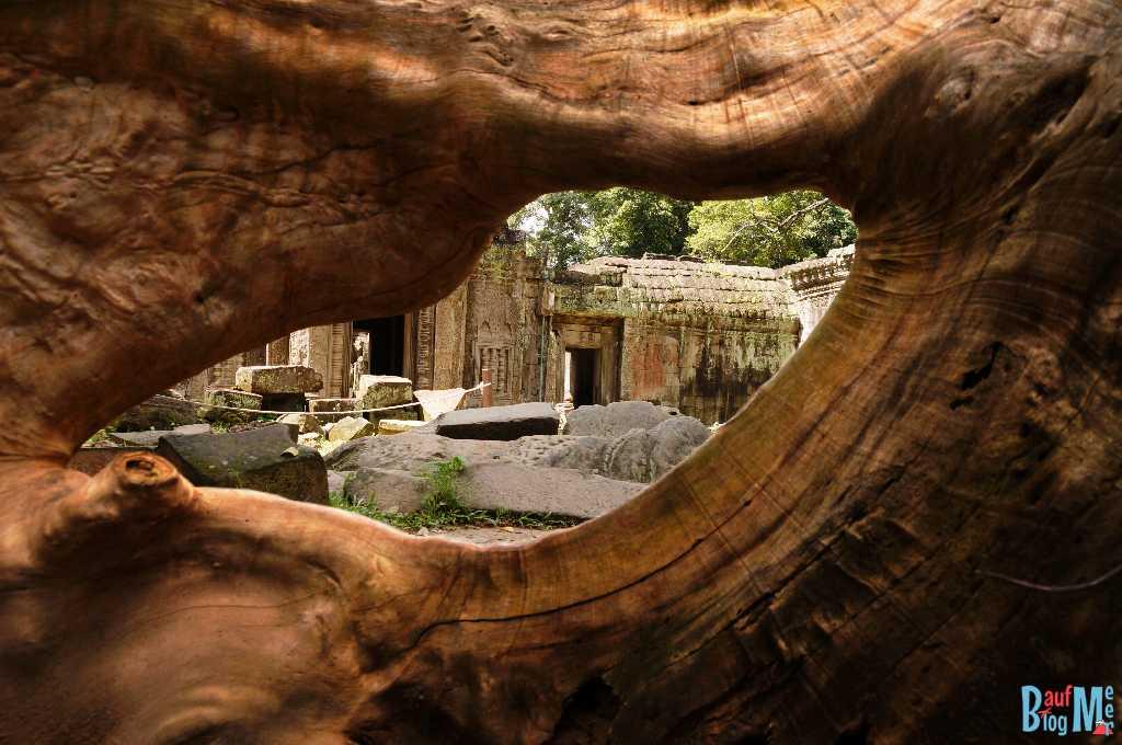 Sicht auf einen Innenhof des Ta Prohm durch ein Loch in einer Wurzel.