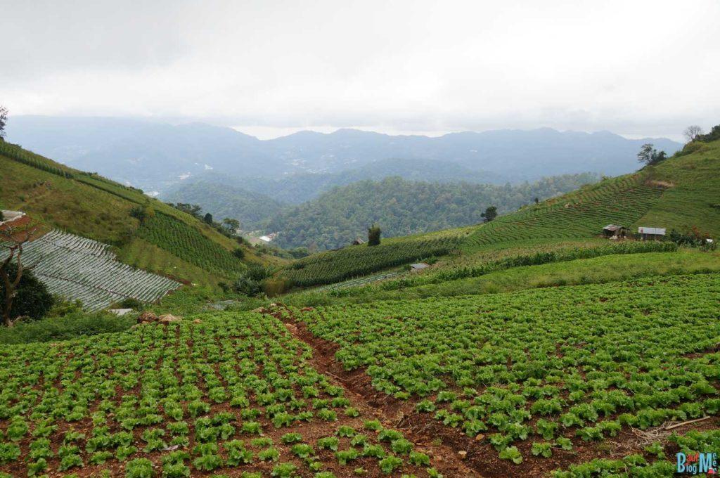 Ausblick auf Gemüsefelder in der Nähe von Man Jam bei Chiang Mai
