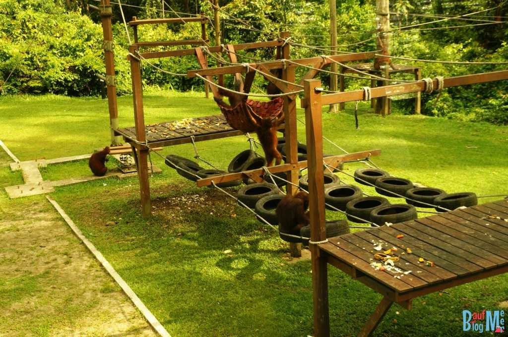 Orang-Utan Nursery in Sepilok