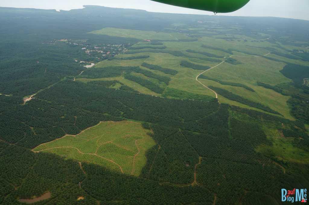 Ausblick auf Palmölplantangen auf Borneo