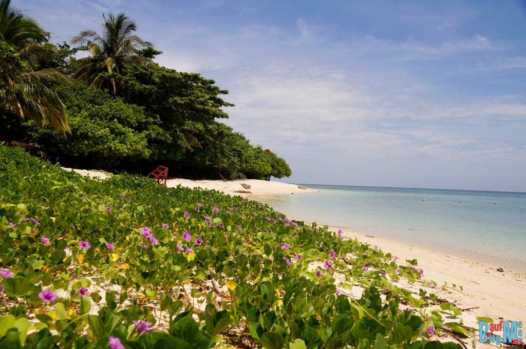 Grün bewachsener Abschnitt eines Strandes auf Turtle Island Selingan