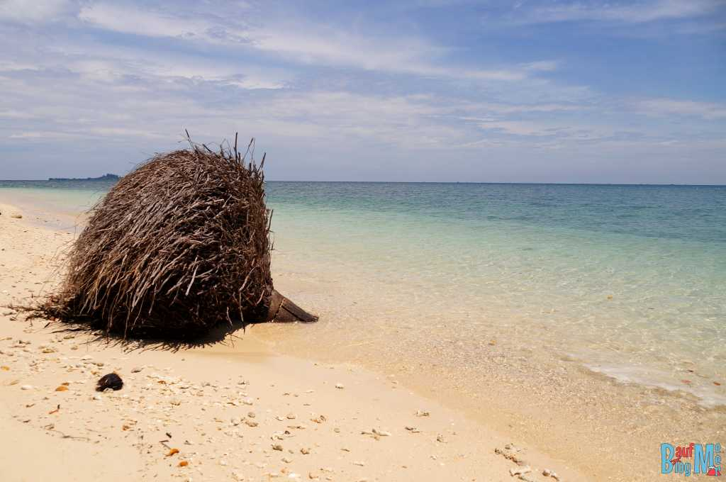 Palmenwurzel am Strand von Turtle Island Selingan