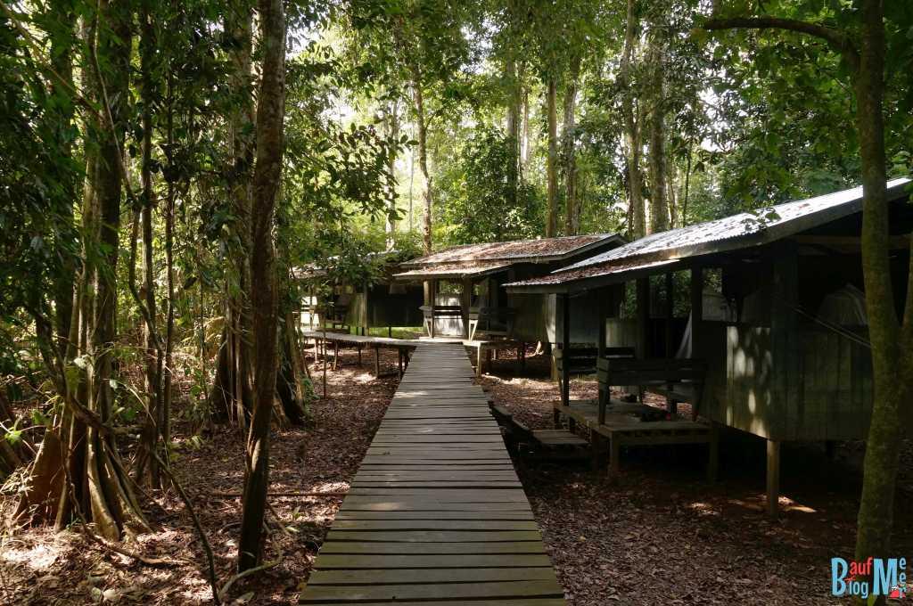 Plankenwege zu Camp Häusschen am Kinabatangan River
