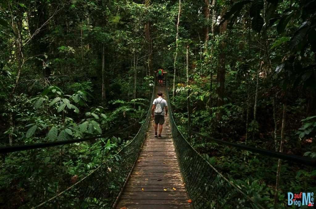 Hängebrücke im Rainforest Discovery Centre