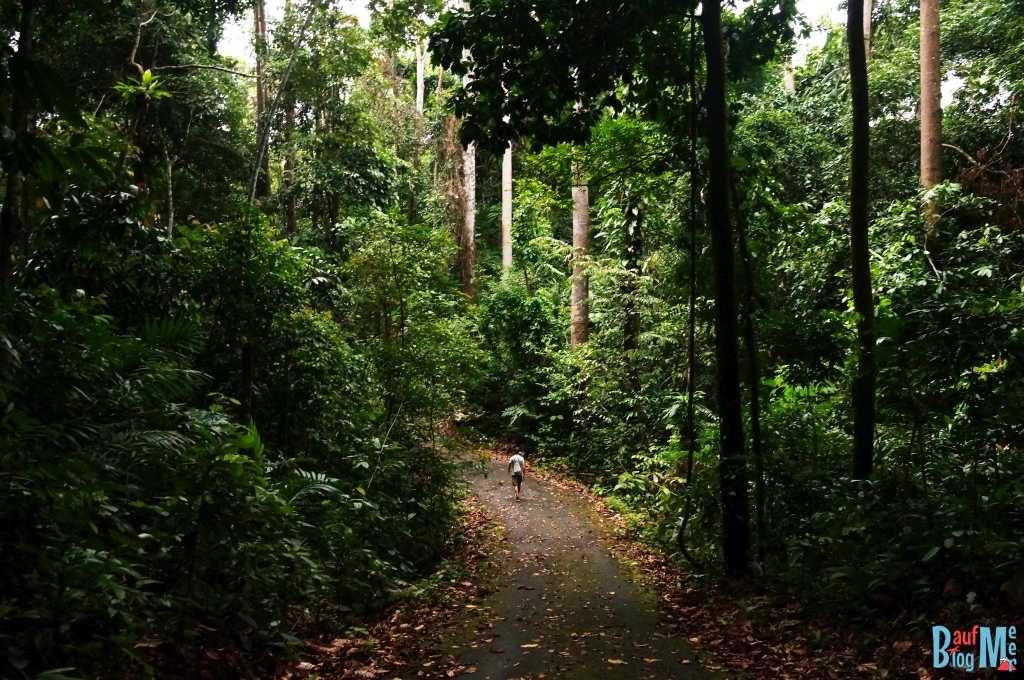 Spazierwege im Rainforest Discovery Centre